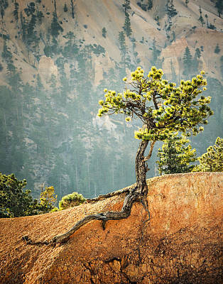 Photograph - Roots Rock by Nancy Strahinic