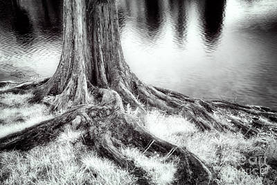 Roots Run Deep - Greensboro Nc Art Print