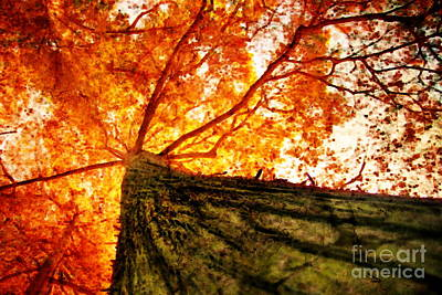 Roots To Branches IIi Art Print by Floyd Menezes
