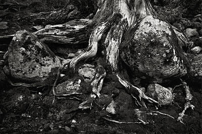 Photograph - Roots Will Find A Way by Robert Woodward
