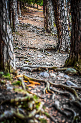 Print featuring the photograph Rootway by Matti Ollikainen