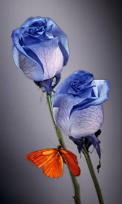 Rosa Azul With Orange Original