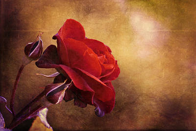 Rosa Rossa Art Print