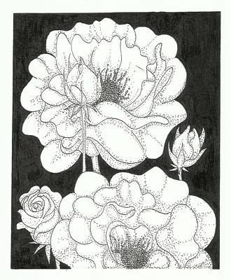 Rosaceae Drawing - Rosaceae by Mei Mei