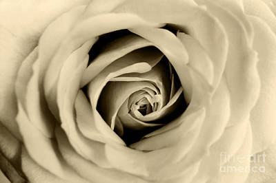 Photograph - Rosas Sepia by Eden Baed