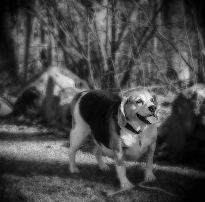 Photograph - Roscoe by Jorge Perez - BlueBeardImagery
