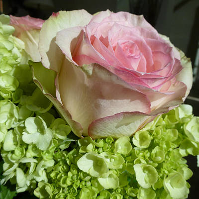 Wedding Photograph - Rose 1 by Claudia Goodell