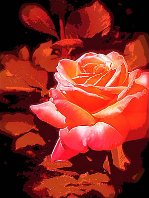 Rose 1 Art Print by Pamela Cooper