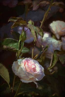 Rose 122 Art Print by Pamela Cooper