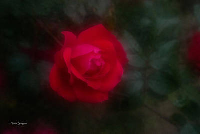 Art Print featuring the photograph Rose 2 by Travis Burgess