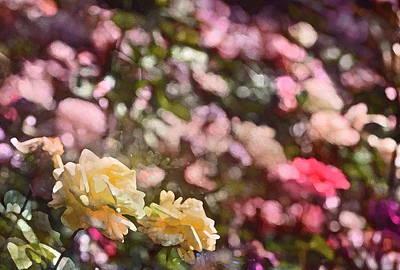 Rose 209 Art Print by Pamela Cooper