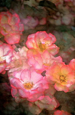 Rose 212 Print by Pamela Cooper