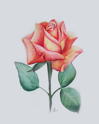 Rose 4 Art Print by Nancy Edwards