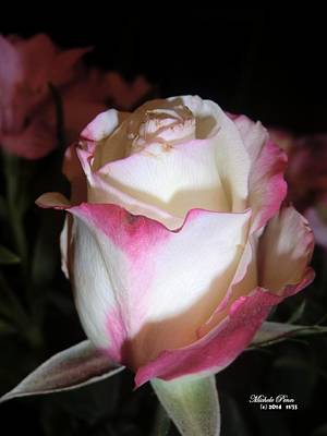 Photograph - Rose Amour.  Limited Edition Of 33. by Michele Penn