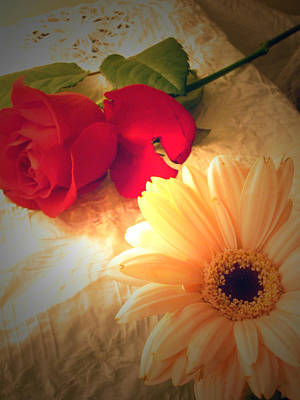 Photograph - Rose And Gerbera Still Life by Amber Nissen