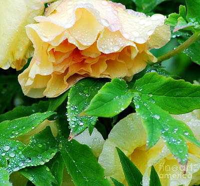 Macro Photograph - Rose And Leaves On A Rainy Day by Nancy Mueller