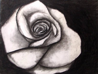 Drawing - Rose by Angela Stout