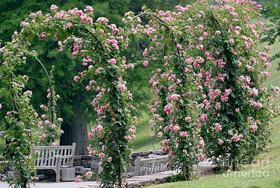 Photograph - Rose Arbor by Living Color Photography Lorraine Lynch