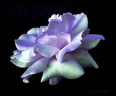 Purple Flowers Photograph - Rose Awakening Floral by Jennie Marie Schell