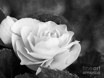 Photograph - Rose Begonia In Black And White by Lee Craig