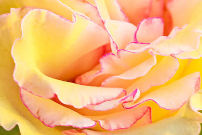Photograph - Rose by Ben Graham