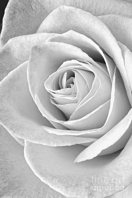 Flower Design Photograph - Rose Black And White by Edward Fielding