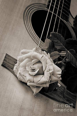 Photograph - Rose Bloom Flower On Guitar In Sepia 3262.01 by M K  Miller