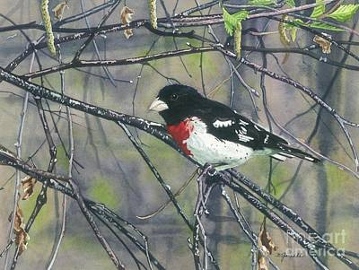 Painting - Rose-breasted Grosbeak by Barbara Jewell