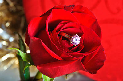 Janet Smith Photograph - Rose Bring by Janet Smith