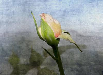 Photograph - Rose Bud  by Betty  Pauwels