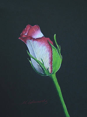 Inviting Drawing - Rose Bud by Marna Edwards Flavell