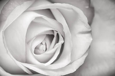 Photograph - Rose Bw by Ron Pate