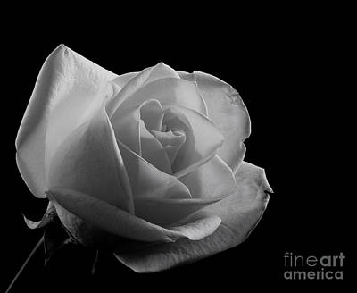 Photograph - Rose By Any Other Name by Sandra Clark