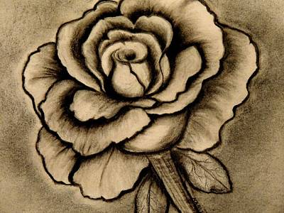 Roses Drawings - Rose Charcoal Drawing  by Nancy Wagener