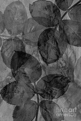 Photograph - Rose Clippings Mural Wall - Black And White by Claudia Ellis