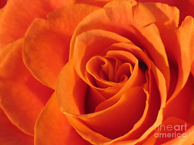 Photograph - Rose Close Up by Art Photography