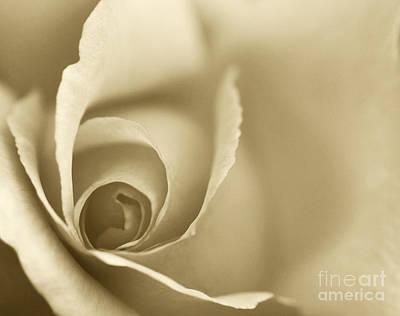 Rose Close Up - Gold Art Print by Natalie Kinnear