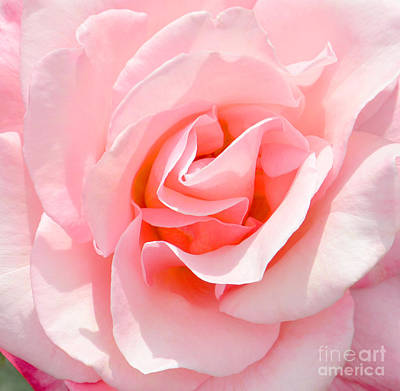 Wall Art - Photograph - Rose Closeup by Susan Montgomery