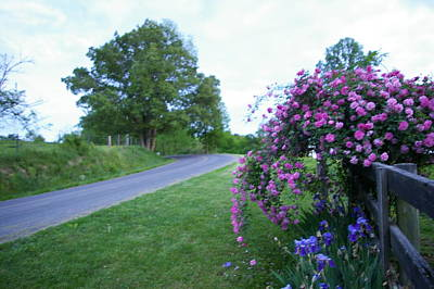 Photograph - Rose Country Road by Elizabeth King