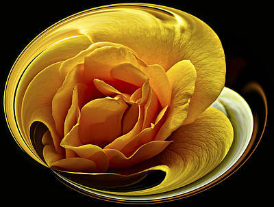 Rose Cup Art Print by Gary Neiss