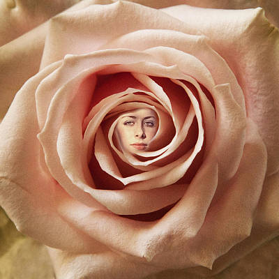 Digital Art - Rose by David Davies