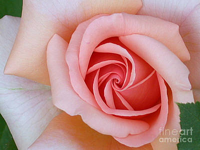 Photograph - Rose Details by Living Color Photography Lorraine Lynch