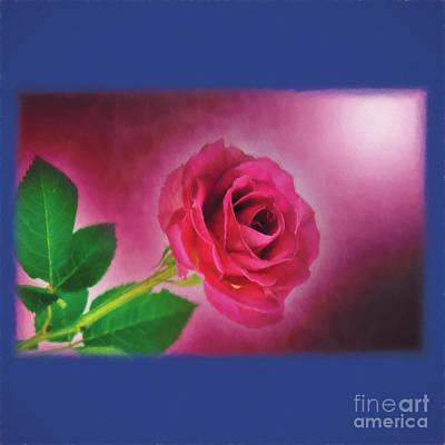 Rose Duvet Cover Art Print by Ed Churchill