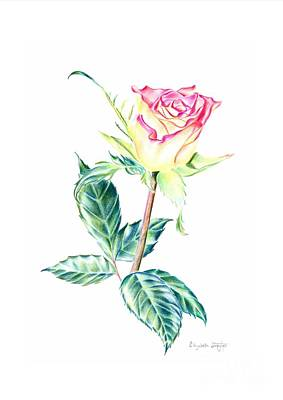 Drawing - Rose by Elizabeth Lock