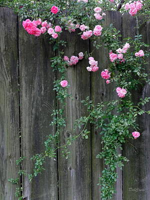 Photograph - Rose Fence by Deborah  Crew-Johnson