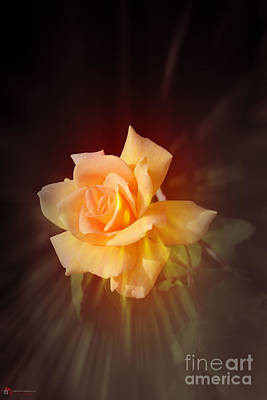 Photograph - Rose Flare by Rob Heath