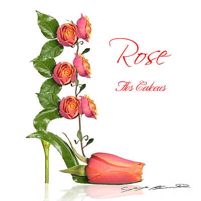 Rose Flos Calceus Art Print by Blanchette Photography