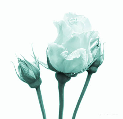 Photograph - Rose Flower Bud In Teal Green by Jennie Marie Schell