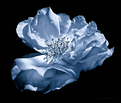 Photograph - Rose Flower Full Bloom Blue by Jennie Marie Schell