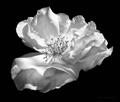 Photograph - Rose Flower In Full Bloom  Black And White by Jennie Marie Schell